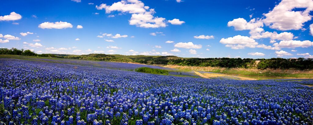 Picture-Texas-bluebonets-power-to-choose