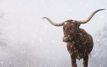 Texas Winter Storm: Tips for staying safe & warm, EnerWisely